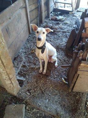 Crueldade: Ong Bom pra cachorro e PM Ambiental flagram diversos animais em situação de maus-tratos em Joaçaba
