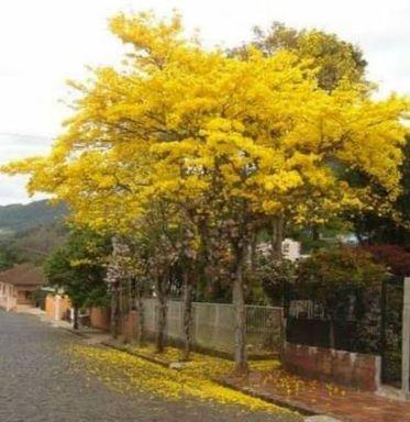Conheça o jardim que embeleza uma das principais ruas de Herval d' Oeste