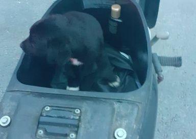 Mulher é detida após trancar cão no compartimento da Biz em SC