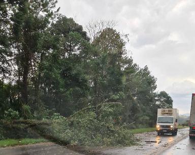 Vento provoca queda de árvores na BR 282