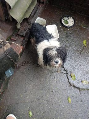 Após justiça decidir que animal recolhido deve ser devolvido ao dono, ONG busca reverter a situação
