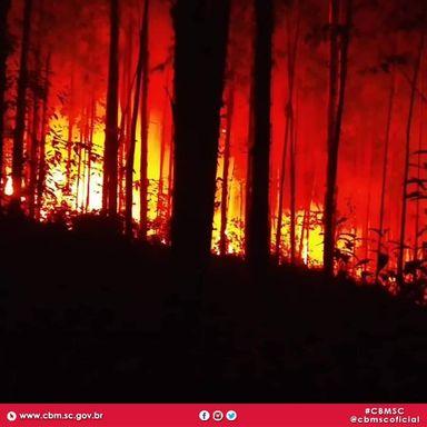 Bombeiros combatem incêndio em reflorestamento  no interior de Tangará