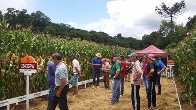 Dia de Campo em propriedade na Linha Grafunda expõe a produtores novidades e tecnologias na produção de milho