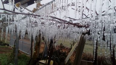 Parreiral de Uva Congelado