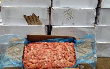 Forma como estavam armazenados os camarões