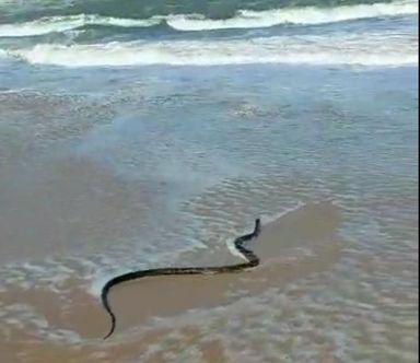 Cobra é vista no mar em praia de SC