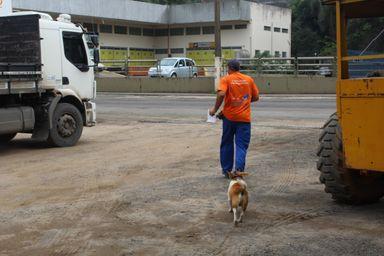 Marquito: o caõzinho que fez amizade com funcionários e virou mascote de uma empresa em Joaçaba