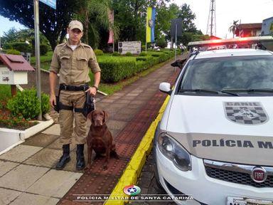 Cadela Tuca se aposenta, após 10 anos atuando no canil da PM de Herval d´oeste