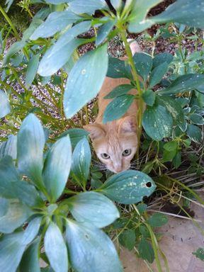 Essa gatinha esta perdida ajudem por favor