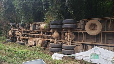 Caminhão estava carregado de suínos